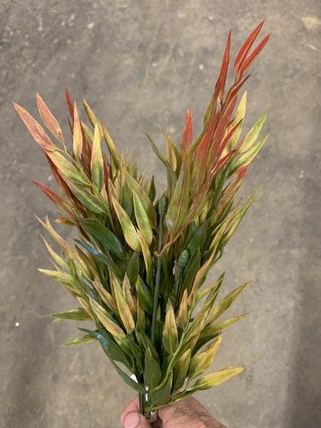 Red zebra grass
