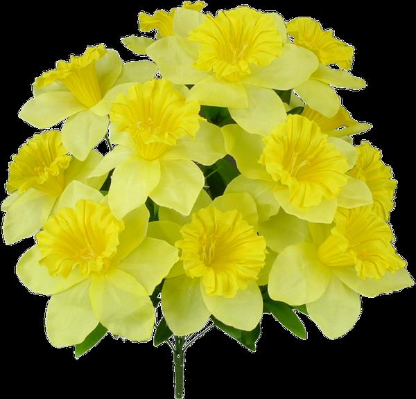 Daffodil Bush x 12 H19 Yellow