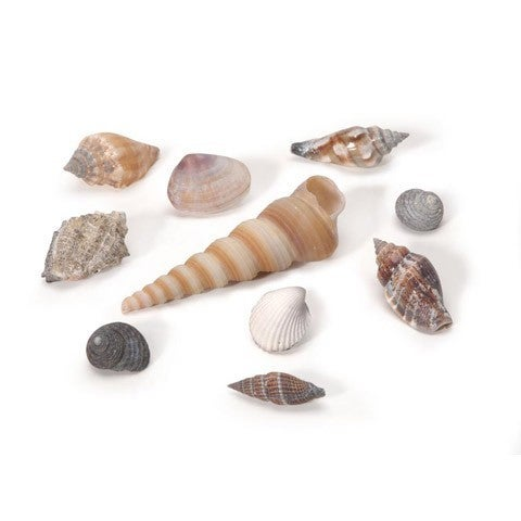 Assorted Small Natural Shells, 500 Grams