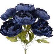 Peony Bush X 10 H20  Navy Blue