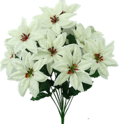 Color Fast Poinsettia Bush x 14 H22 Cream