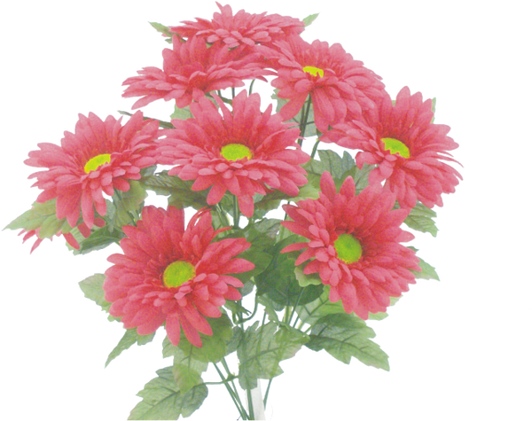 Color fast Gerbera bush x 9  Hot Pink