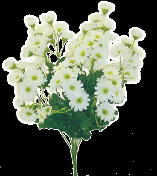 Mini Daisy Bush x 9 H17 White