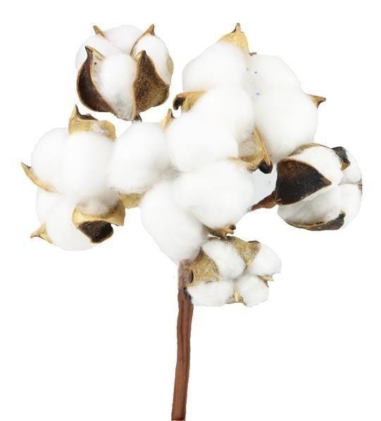"""10""""L Cotton/Super Cotton Stem Bouquet"""