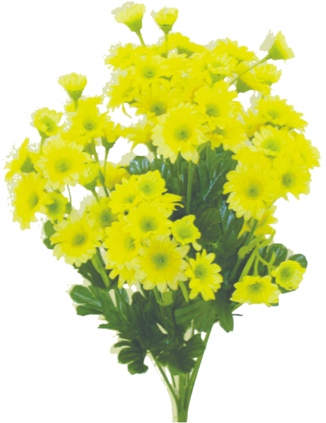 Mini Daisy Bush x 9 H17 Yellow