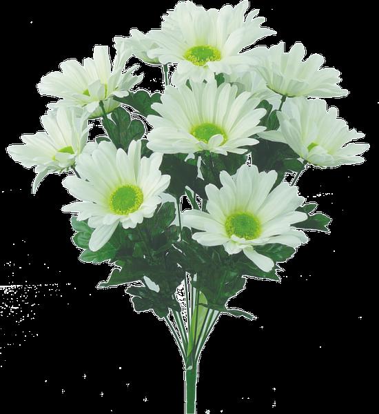 "Daisy bush x 12, 21""H Cream"