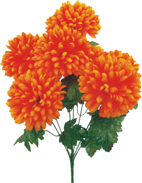 "Giant Ball Mum bush x 7, 6.25""Dia 24""H Orange"