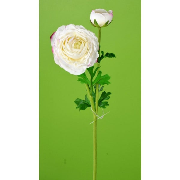 "23"" FRESH TOUCH RANUNCULUS STEM WHITE"