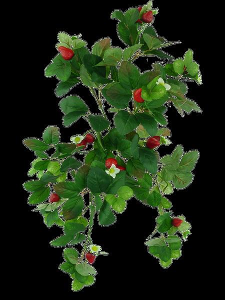 Strawberry Hanging Bush X 7 H18