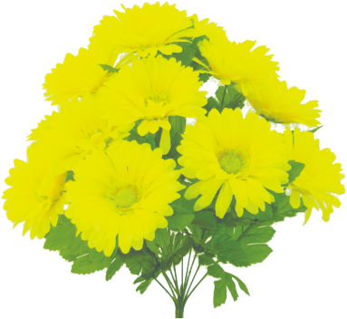 "Gerber Daisy bush x 12, 19""H Yellow"