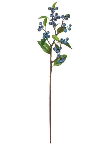 BLUEBERRY STEM