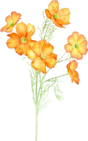 SAT COSMO SPARY 30H Orange