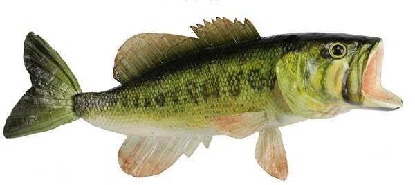 """15""""L Largemouth Bass"""
