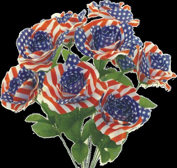 Color Fast American Flag Rose bush