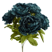 Color Fast Peony Bush x 5 H22 Navy