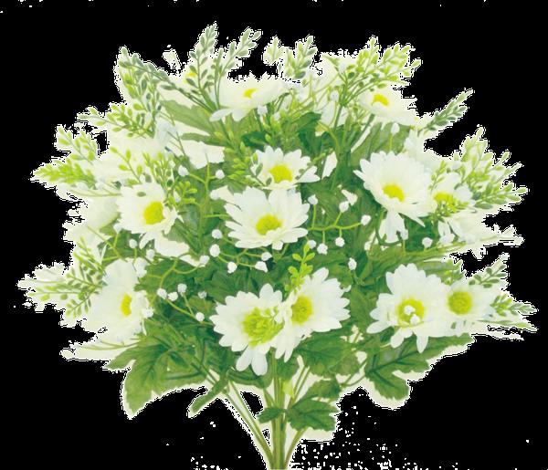 Daisy Bush x 14 H18 White