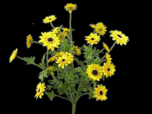 Sunflower bush x5, 25H YELLOW