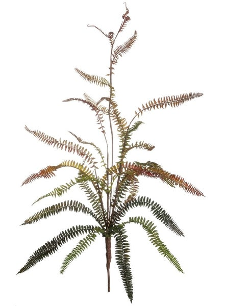 FERN BUSH LARGE