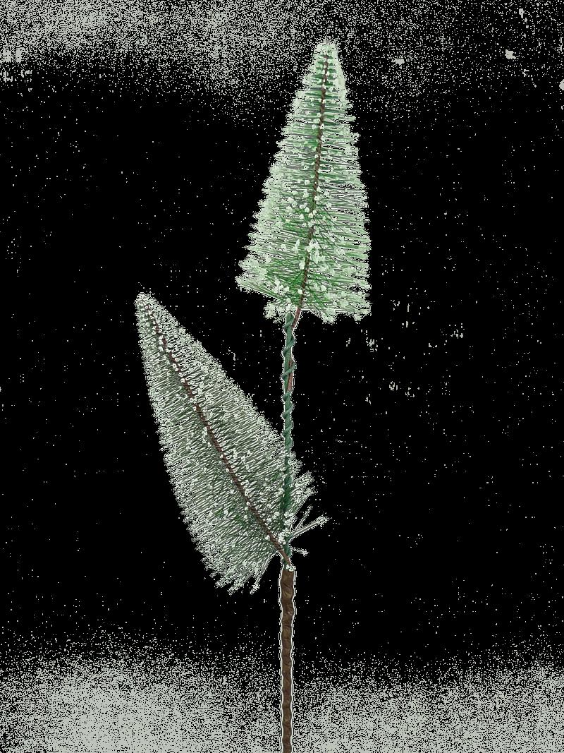 Bottle Brush Tree Spray X2 H20
