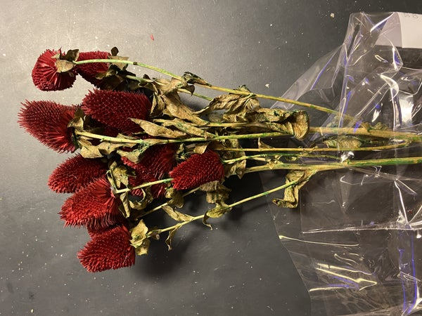 dried clover