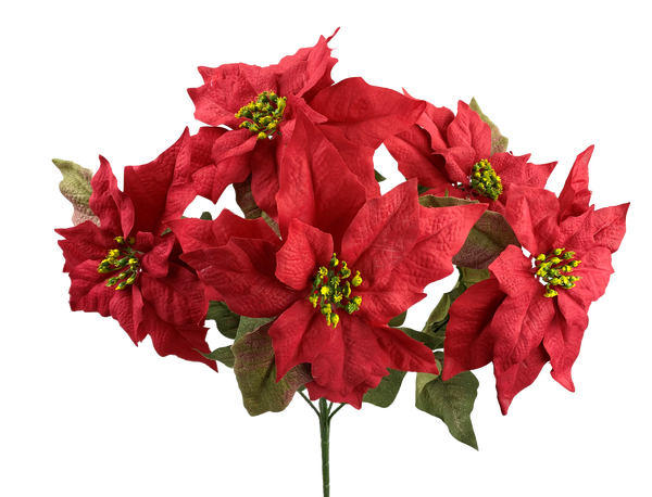 Poinsettia Bush x 5 H21 Red