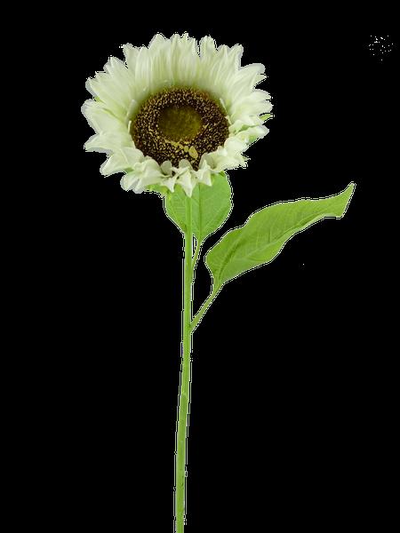 Sunflower Stem Dia6Xh29 Cream