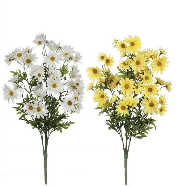 DAISY BUSH White/Yellow