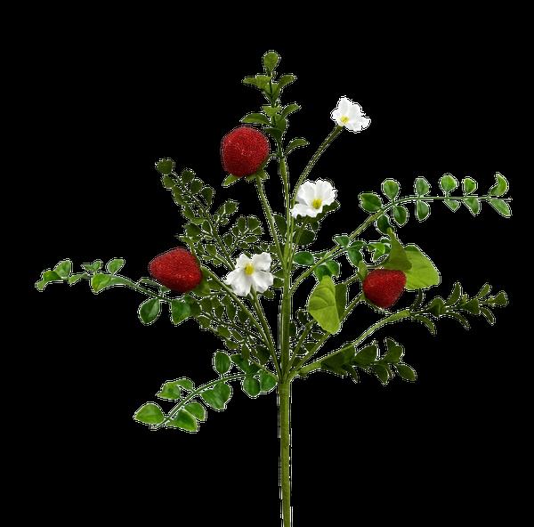 Strawberry Pick H16