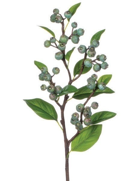 BLUEBERRY STEM BL
