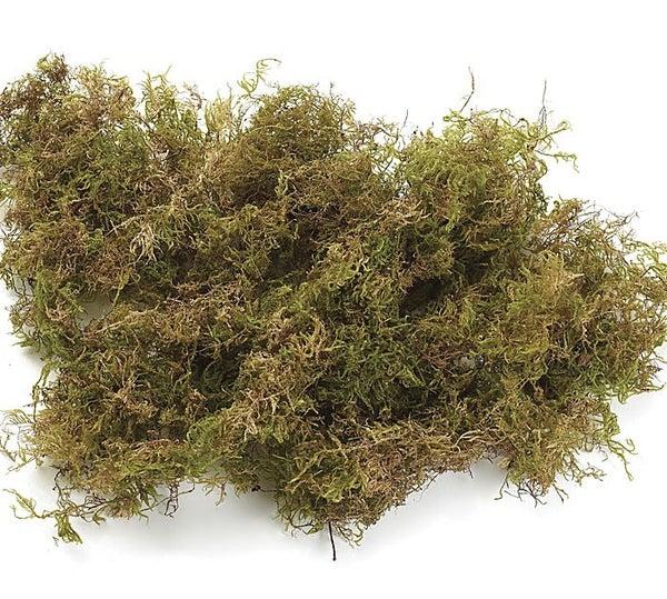 FLORAL-SHAG MOSS 1.6 CU FT Moss