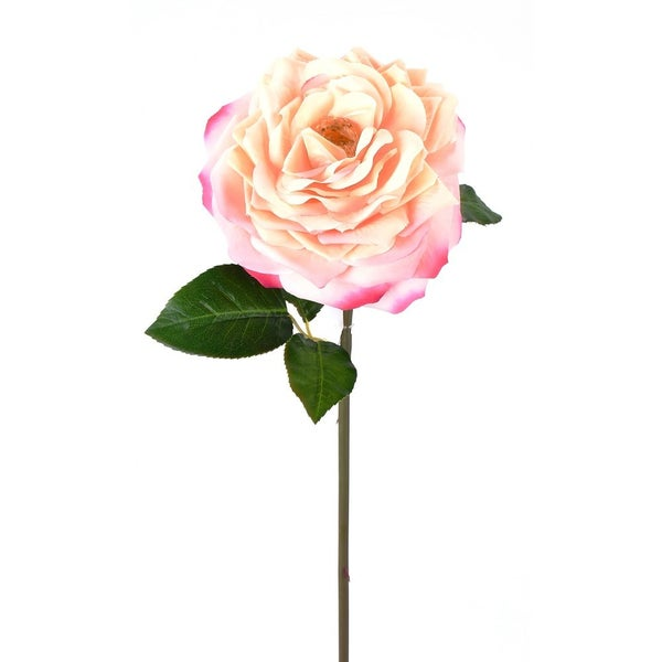 "21"" HYBRID GARDEN ROSE STEM Blush"