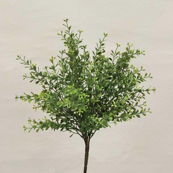 """Fresh Mini Boxwood Bush 9""""x16"""""""