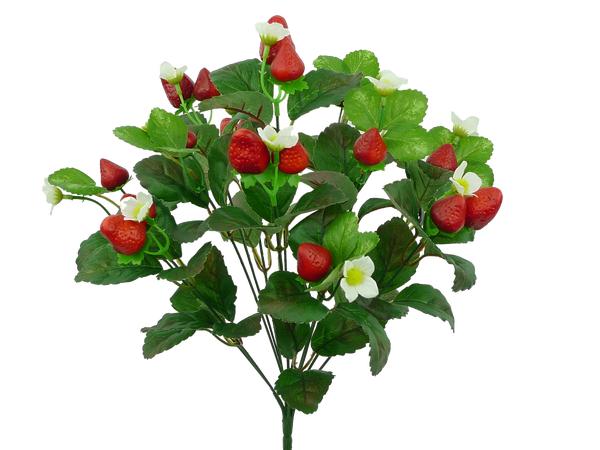 Strawberry Bush X 12 H17