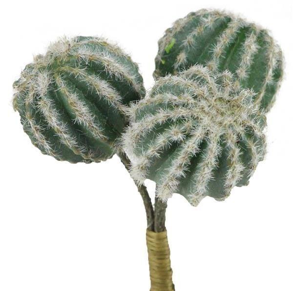 """6.5""""L Barrel Cactus Bunch X X3"""