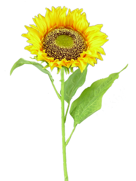 Sunflower Stem 29Hx6Dia Yellow
