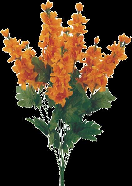 Color fast Delphinium bush x 9 Orange