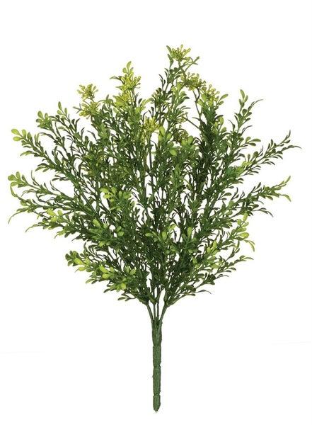 TEALEAF BERRY PLANT
