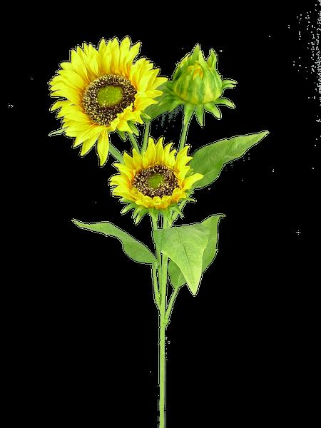 Sunflower Spray X 3 Dia5.5Xh26 Yellow