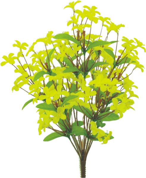 "Forsythia bush x 12, 18""H  Yellow"