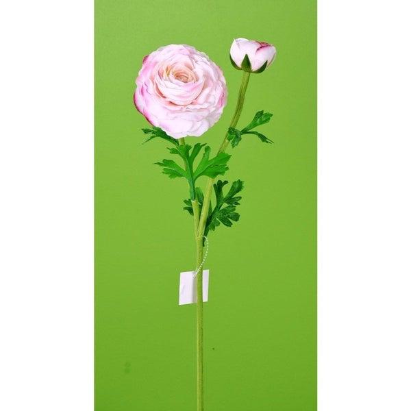 "23"" Fresh Touch Ranunculus Stem Blush"