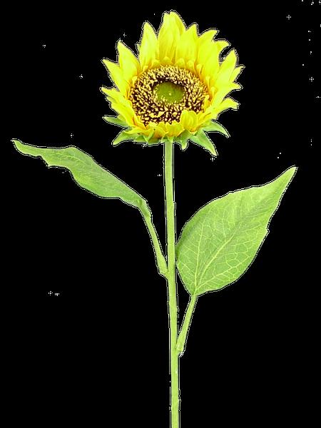 Sunflower Stem 22Hx4Dia Yellow