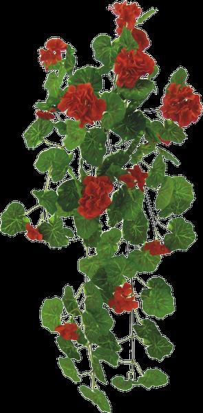 "Hanging Geranium bush 30""H"